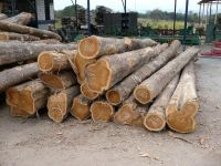 Rose Wood, Mahogany, Gmelina,Mouabi, Niove, Okan, Okoume\Timber, Round Logs Timber,Kosso