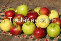 2014 Fresh Apple of Fruit From Turkey