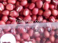 2014 new crop small small red bean / adzuki bean