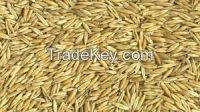 Oats - Kiln Dried Hulled