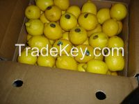 Fresh Citrus fruits  Apple