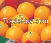 Fresh Citrus fruits, Apple,oranges,lemon,bananna,avocado, fresh vegetables