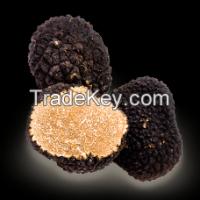 """Black truffles Latin name """"Tuber aestivum"""""""