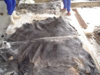 QUALITY SALTED DONKEY HIDE