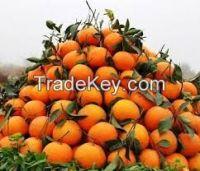 Pak Citrus