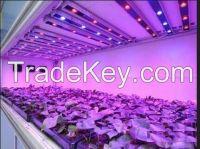 Leds Horticulture 20Watt Hps Grow Kit Oyster Mushrooms/Botanical Garden Panel Grow Lights 28W /36w/72W LED Grow  lights