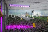 LED Grow light Made in