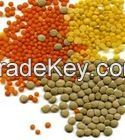 Export Quality Red & Green Lentils