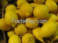 Egyptian lemon for sale and at competitive prices
