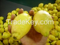 fresh lemon high quality and at competitive prices