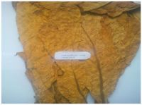 Flue Cured Virginia (FCV) Tobacco - Grade: TM (Top Mature)