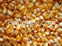 Yellow corn/maize