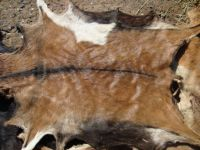 Dry and Wet Salted Cow and Sheep Skin, Wet salted Donkey / Cow Skin and Cow Hides and Other Animal Skin Avalaible