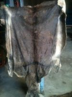 Dry and Wet Salted Donkey hides, Wet salted Donkey / Cow Skin and Cow Hides and Other Animal Skin Avalaible