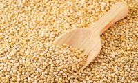 suppliers quinoa roja, blanca, negra, organica, conventional from peru
