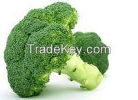 tender stem broccoli