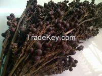 Ratan Seed / Jernang