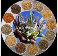 Spice / Millet