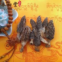 Toadstool/Morel/Morchella vulgaris from Sichuan province.