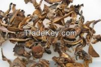 Dried Suillus Granulatus Strips