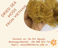 Sea moss Gummies Candy Soft With 6 Flavor Good For Health / Ms.Thi Nguyen +84 988 872 713