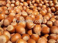 Hazelnut and hazelnuts flour