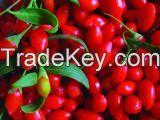 Organic Goji Berry-Chinese Goji Berry