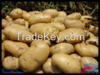 Vegetables and fruits, mainly garlic, ginger, chestnuts, gojiberry, apples, pears and so on
