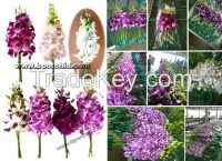 A Varieties of Beautiful orchids lies from Thailand