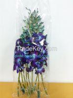 Dendrobium Orchid Cut Flower