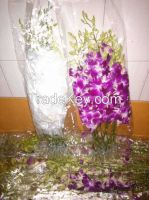 High qaulity of Orchid Cut Flower