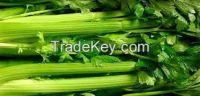 celery stem dehydrated celery stem