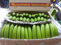 Cavendish bananas.