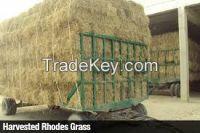 Rhode Grass