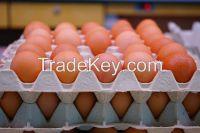 Fresh Table Eggs, white, brown