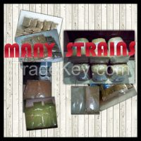 High Quality buy Herbal Product Kratom Powder from Indonesia