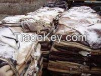 Salted Raw Sheepskin Hides