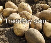 Potatoes (Aaloo)