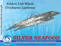 Ribbon fish, Trichiurus Lepturus