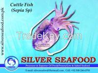 Cuttle Fish.Sepia Sp