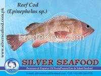 Reef Cod,Epinephelus Sp