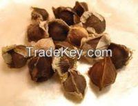moringa seed spinash seeds