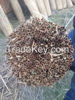 water reed for roofing