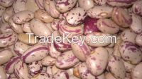 Red Speckled Sugar Beans/Purple Speckled Kidney Beans/White Kidney Beans/Jugo Beans