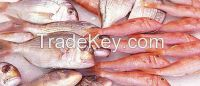 Frozen Fish And Sea Food
