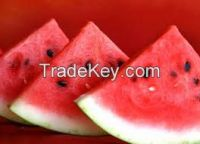 Fresh Watermelons Available in tons
