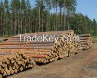 Freshcut wood logs