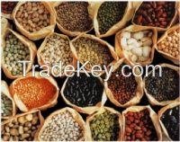 Beans Kidney Beans, Chickpeas, Soybeans, Lentils, Vigna Beans, Peas, Mung Beans, Black Beans, Broad Beans, Lima Beans, Butter Beans, Robusta Coffee Beans