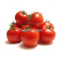 Holland Tomato Cherry