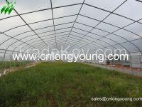 Single Tunnel Greenhouse on Sale
